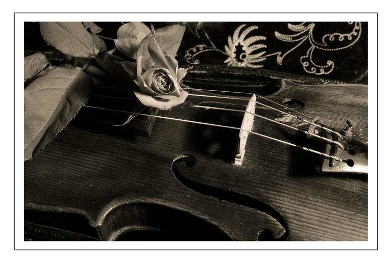 Rose auf Geige