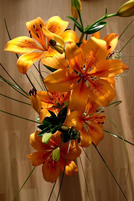 Tigerlilie I